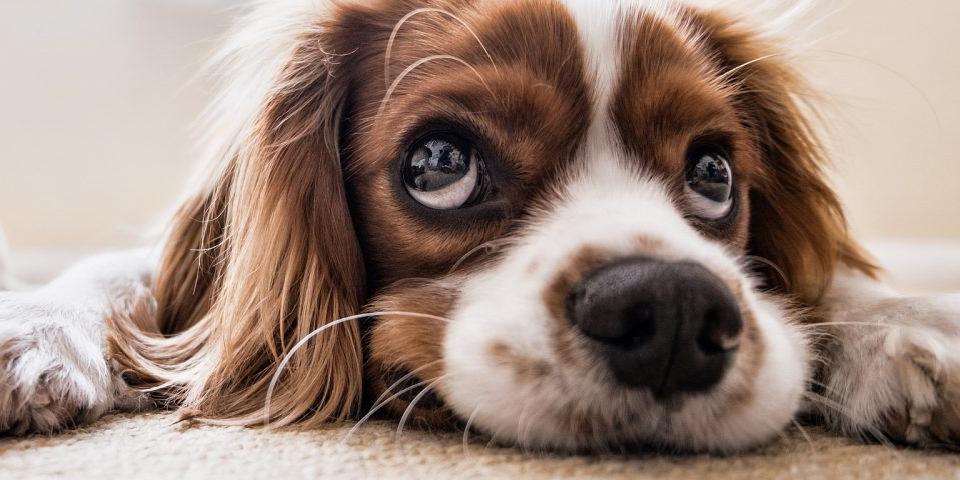 tips bji onweer voor je huisdier